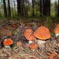 У Житомирі від отруєння грибами помер чоловік