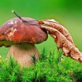 У Бердичеві подружжя отруїлося грибами: дружина померла, чоловік все ще в реанімації