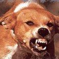 Цьогоріч в Житомирській області на сказ захворіло 29 тварин