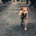 У Житомирі пес покусав трирічного хлопчика