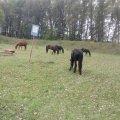 На закрытой территории арсенала на Житомирщине выпасают скот, - прокуратура. ФОТОрепортаж