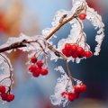 В Україні вночі заморозки. Житомирщину теж не омине