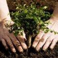 """У рамках акції """"Зелені легені"""" біля житомирських навчальних закладів висадять 200 дерев"""