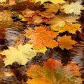Погода в Житомире и Житомирской области на среду, 25 октября