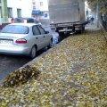 У Житомирі ніхто не прибирає від опалого листя тротуари
