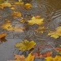 Погода в Житомире и Житомирской области на пятницу, 27 октября