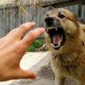 У селі Житомирської області хворий на сказ пес вкусив господаря, а потім напав на інших тварин