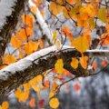На Житомирщині очікується ускладнення погодних умов