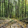 На Чернігівщині знайшли мертвим житомирянина, який втік з військової частини