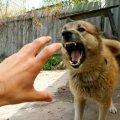 У Баранівському районі хвора на сказ собака покусала свого господаря