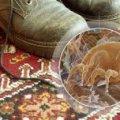 Фахівці Житомирського лабораторного центру шукали пилових кліщів у школах, дитсадках та інтернатах