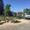 Житомирський виконком дозволив зрізати більше сотні дерев для нової тролейбусної лінії