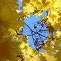 Вихідні в Житомирі будуть теплими
