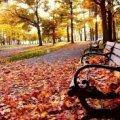 Погода в Житомире и Житомирской области на четверг, 9 ноября.