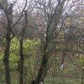 У Житомирі випав перший мокрий сніг. ФОТО
