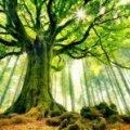 На півночі Житомирської області хочуть утворити лісовий заказник «Урочище Дуби»