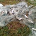 У листопаді Житомирський рибоохоронний патруль вилучив у порушників 149 кг риби