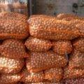 На Житомирщині школярі викрали 28 мішків з горіхами
