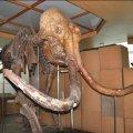 У Житомирі краєзнавчий музей хоче окреме приміщення для цінного експонату.ФОТО
