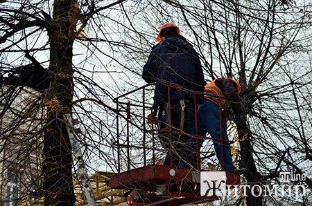 У Житомирі встановили головну ялинку міста. ФОТО
