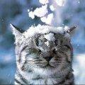 Вихідними у Житомирі йтиме сніг, на дорогах обіцяють ожеледицю