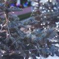 Архітектор Житомира оприлюднив мапу із новорічними локаціями.ФОТО