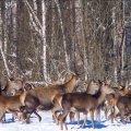 На Житомирщині тварини одного із мисливських угідь знищили понад 2 мільйони дерев через неналежний догляд лісівників, – екологи.ФОТО