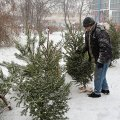 Від 25-ти до 300 гривень доведеться віддати житомирянам за новорічну красуню