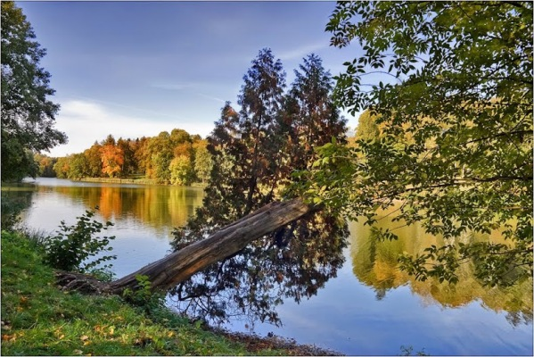 11 найкрасивіших дендропарків України, які варто відвідати цього року