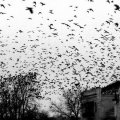 5 тысяч трупов: на Херсонщине идет расследование