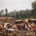 Влада Житомира хоче скасувати рішення про передачу землі в районі паперової фабрики у приватну власність