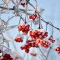 Синоптик рассказала о погоде на праздники