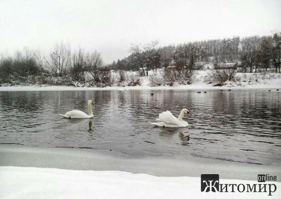 Справжня казка на річці Случ в Новограді-Волинському