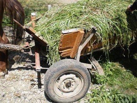 У Житомирській області чоловік загинув, бо впав з підводи