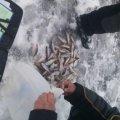 За тиждень порушники 47 разів перевищили дозволену норму гачків на одну людину, – рибоохоронний патруль