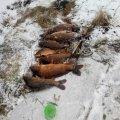 300 кг незаконної риби та 273 заборонених знаряддя лову вилучив Житомирський рибоохоронний патруль за січень
