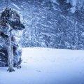 У Житомир повертається зима: синоптики прогнозують хуртовини та морози