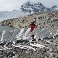 Український полярник: у мене в морозилці шість невідомих науці видів
