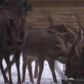 Баранівські лісівники показали, як і чим годують своїх тварин взимку