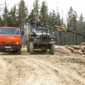 На Житомирщині викрито підприємство, що займалось нелегальним постачанням української деревини за кордон