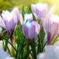 Мер Житомира офіційно затвердив 4 вихідних на 8 березня