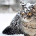 Сегодня днем, 26 февраля, в Украине до 18 градусов мороза