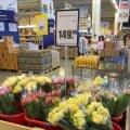 У Житомирі букет тюльпанів з Нідерландів можна купити всього за