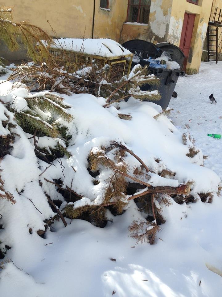 Житомиряне до сих пор выносят новогодние елки на свалку