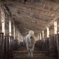 На Житомирщині фермер, який жорстоко поводиться з тваринами, сплатить штраф