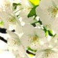 Холодна Пасха, травень без заморозків — синоптик здивував погодою на весну