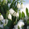 Чому 19 березня треба піти у лазню, потоптати залишки снігу і не можна пити, палити і лаятися
