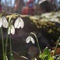 Погода в Житомире и Житомирской области на среду, 21 марта