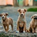 """У КП """"Центр захисту тварин"""" нагадують, що житомиряни можуть допомогти із чіпуванням безпритульних тварин, зателефонувавши"""