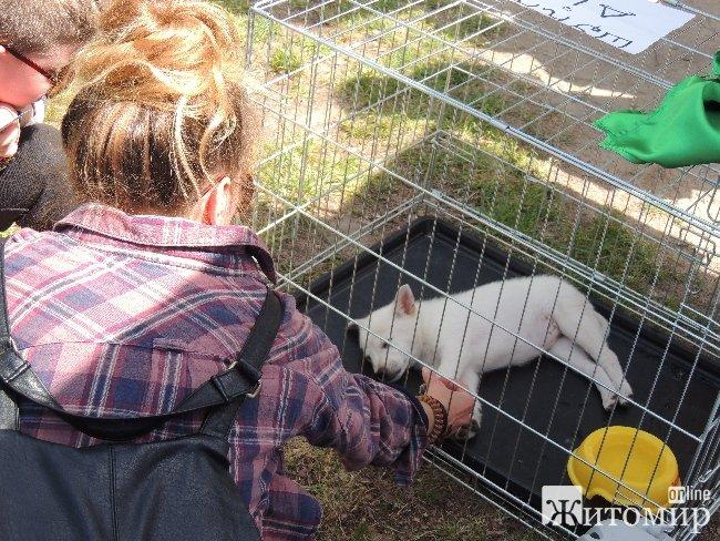 Бо любов не має породи: сьогодні житомиряни мали змогу забрати додому безпритульну тваринку. ФОТОРЕПОРТАЖ